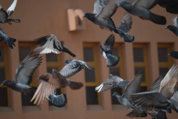 Close-Up Of Birds Flying