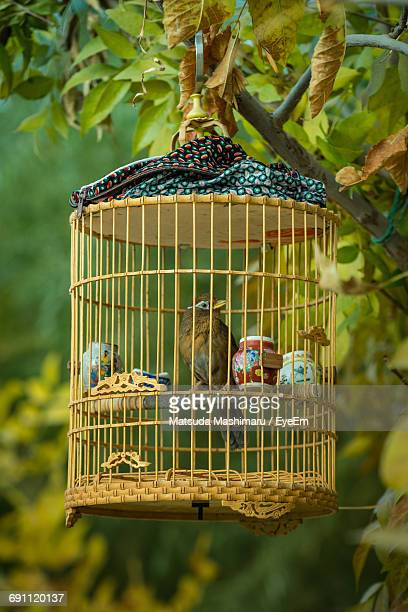 Close-Up Of Birds In Cage