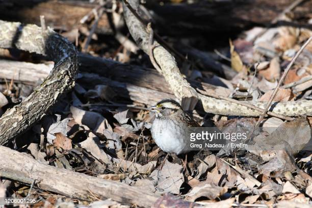 close-up of birds on land - greg nadeau stock pictures, royalty-free photos & images