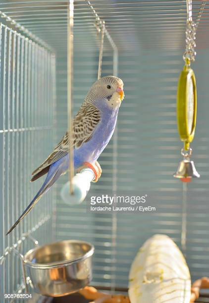 Close-Up Of Birds Perching In Cage