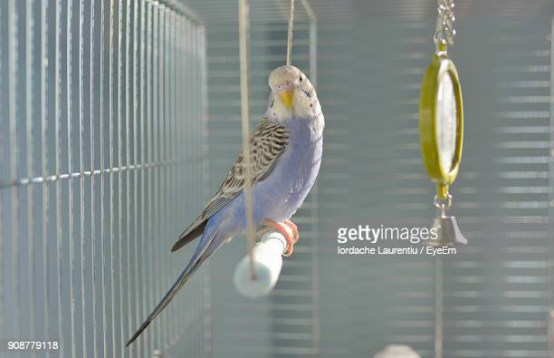 close-up of birds perching in cage - perching stock photos and pictures