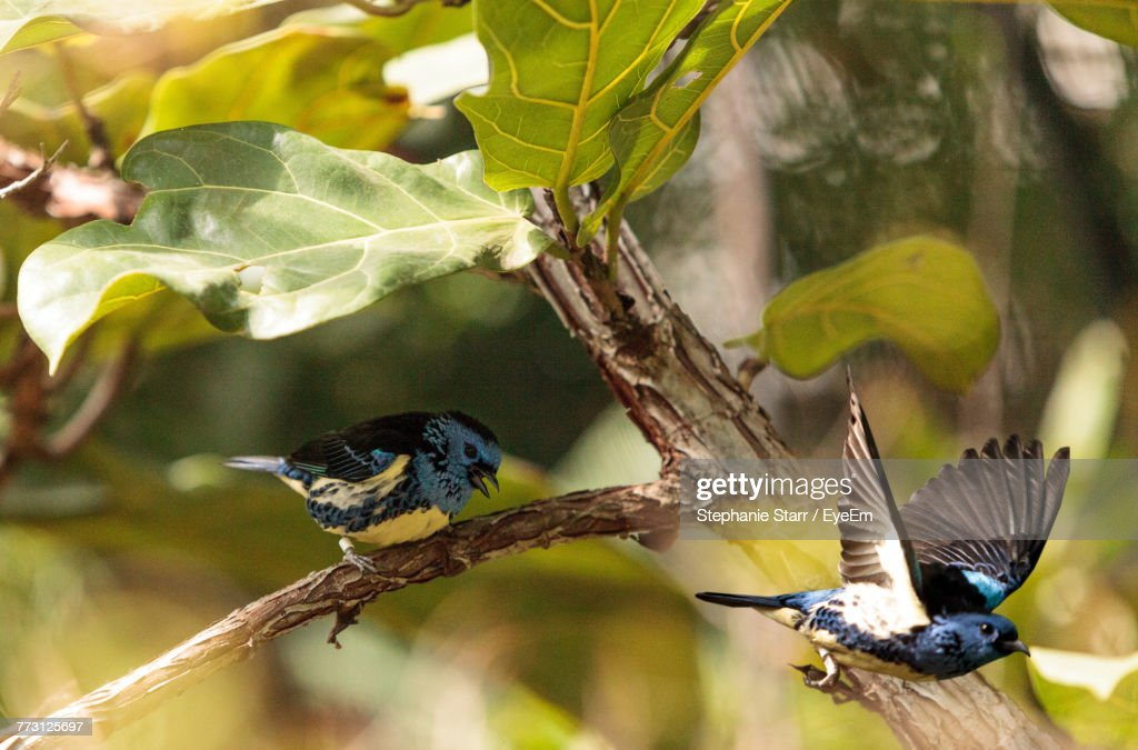Close-Up Of Birds Perching On Branch : Photo