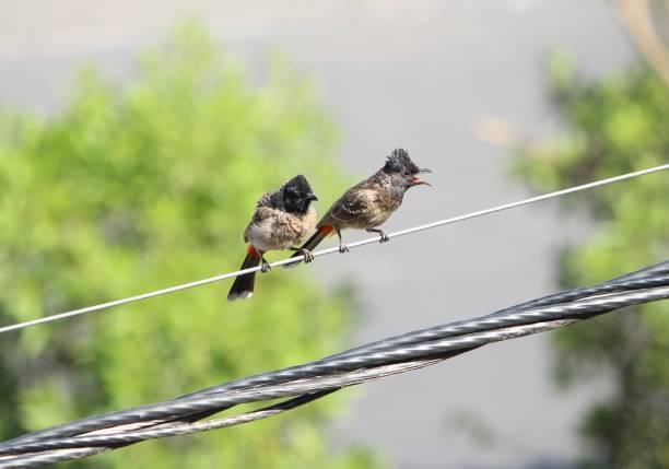 Close-up of birds perching on cable,Vadodara,Gujarat,India