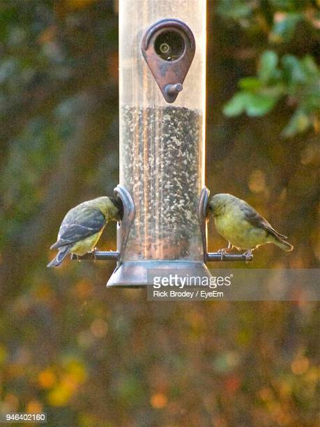 Close-Up Of Birds Perching On Feeder