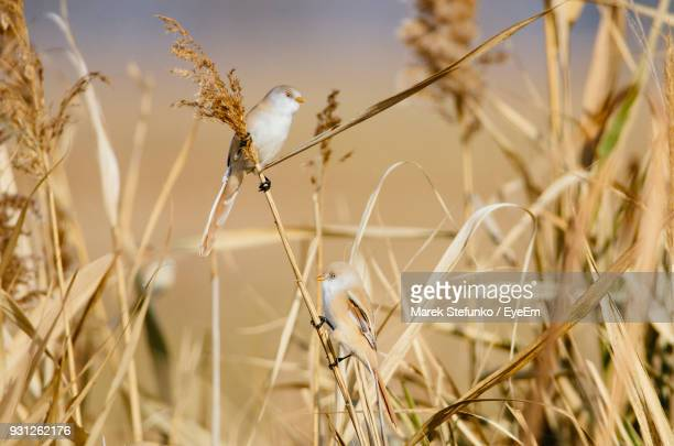 close-up of birds perching on grass - marek stefunko stockfoto's en -beelden