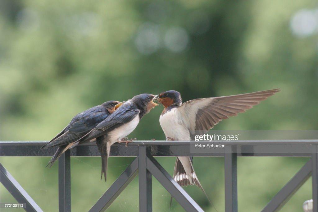 Close-Up Of Birds Perching On Railing : Photo