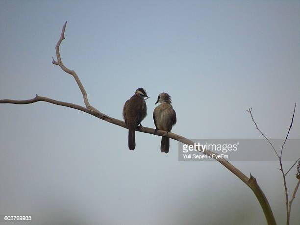 Close-Up Of Birds Perching On Tree Against Clear Sky