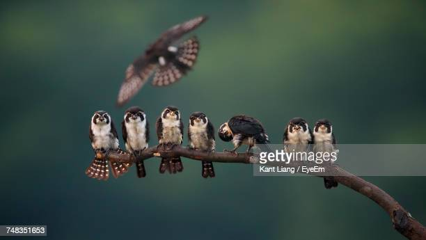 close-up of birds perching on tree - spread wings stock pictures, royalty-free photos & images