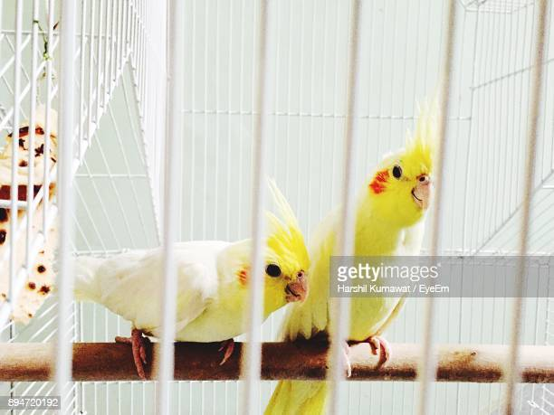 Close-Up Of Birds Perching On Wood In Cage