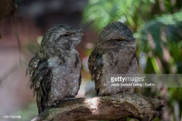 close-up of birds perching on wood - animal behaviour stock pictures, royalty-free photos & images