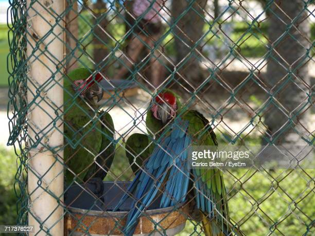 Close-Up Of Birds Seen Through Chainlink Fence