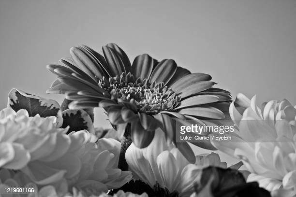 close-up of  black and white flowers - black and white stock pictures, royalty-free photos & images