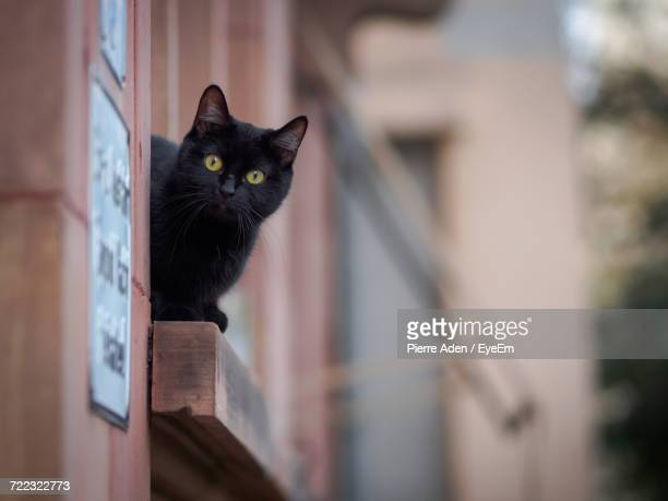 close-up of black cat on window - gatto nero foto e immagini stock