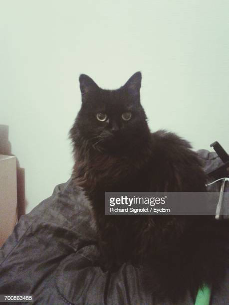 close-up of black cat - val d'oise stock photos and pictures