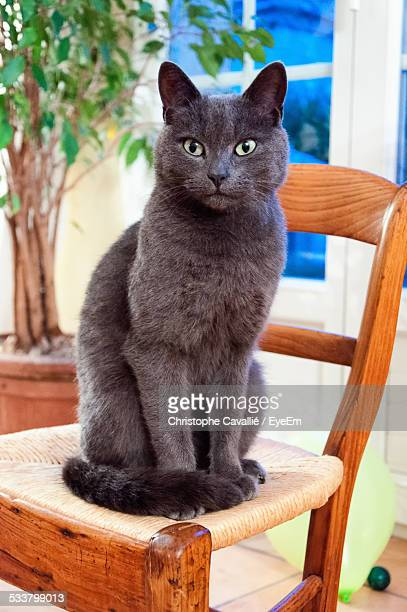 Close-Up Of Black Cat Sitting On Chair