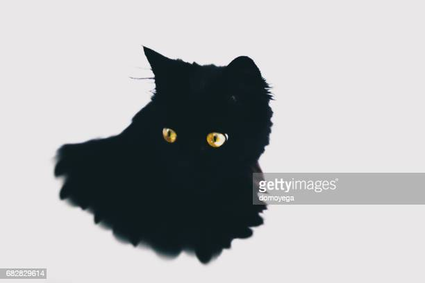 Close-up of black cat with yellow eyes