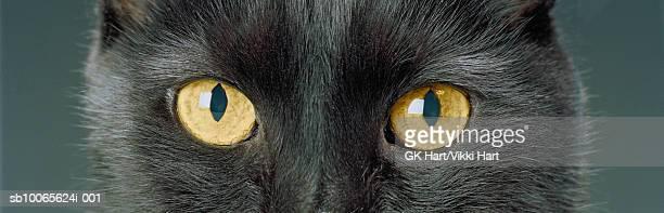 Close-up of black cat's eyes