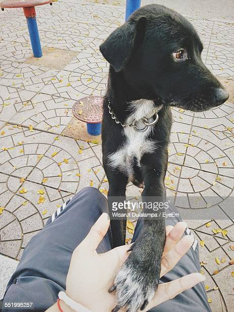 close-up of black dog playing with man - paw stock pictures, royalty-free photos & images