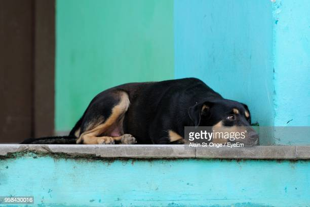 close-up of black dog sitting by wall - eye black stock photos and pictures