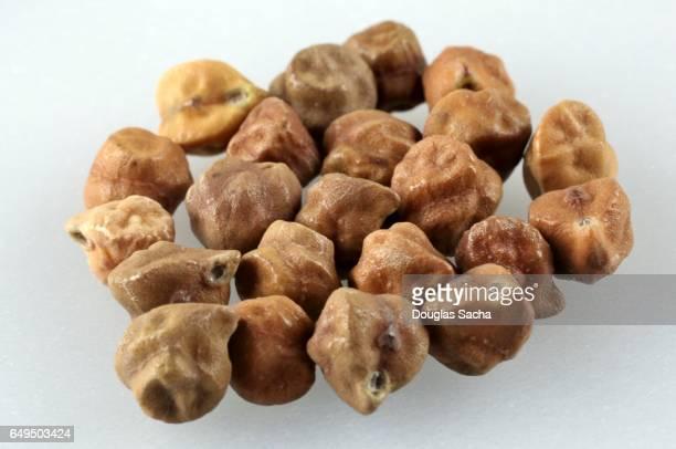 Close-up of Black Garbanzo Beans (Cicer arietinum)