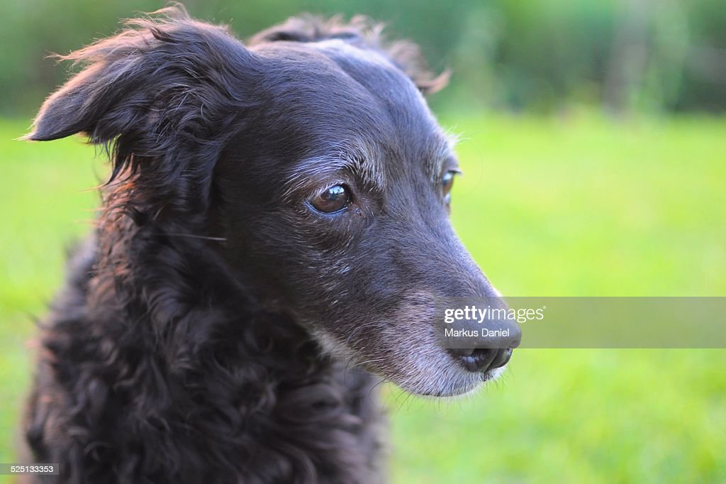 Closeup of Black Mutt Dog sitting in the Grass : Stock Photo