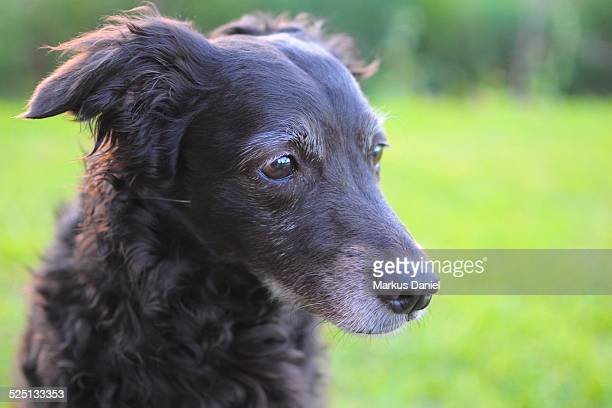 Closeup of Black Mutt Dog sitting in the Grass