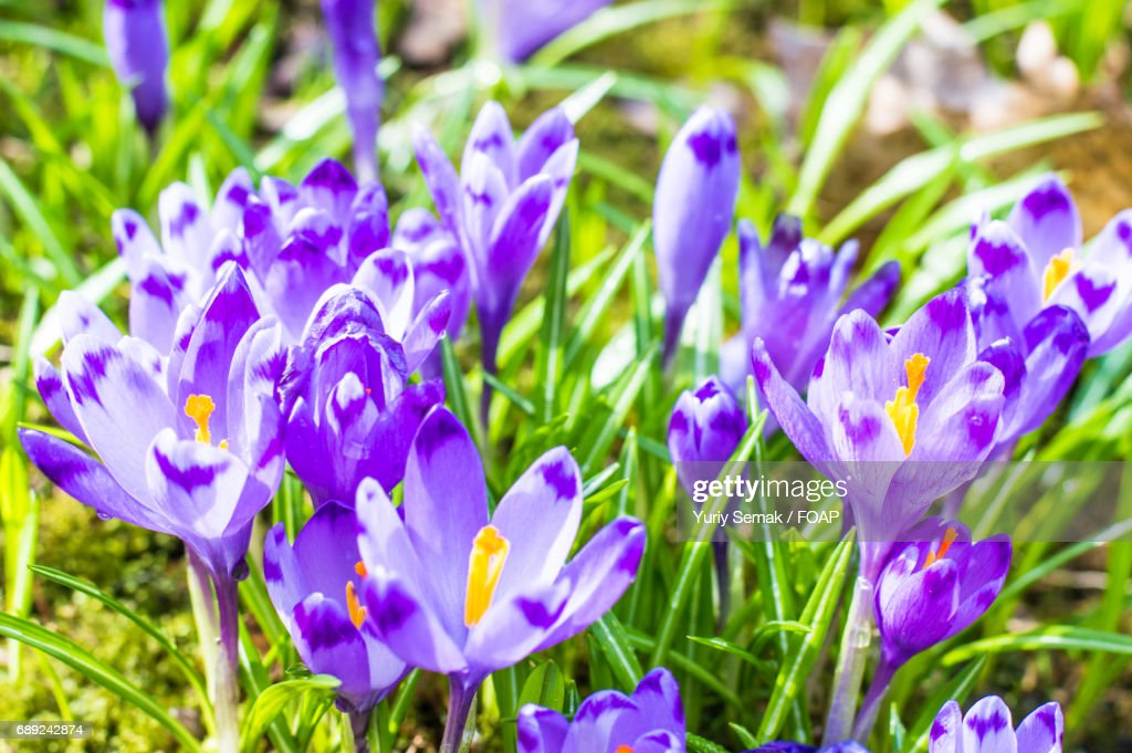 Close-up of blooming flowers : Stock Photo