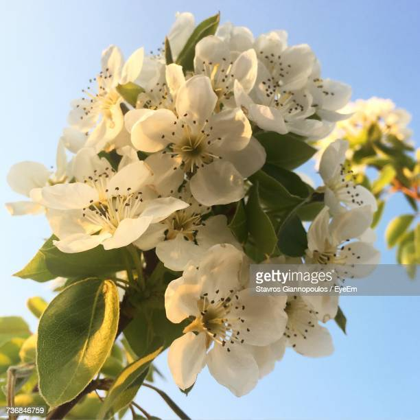 Close-Up Of Blooming Tree Against Sky