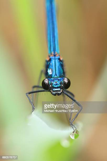 close-up of blue dragonfly - michael hruschka stock pictures, royalty-free photos & images