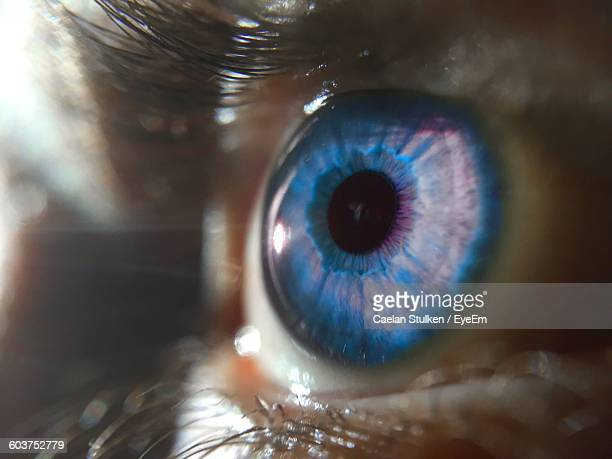 close-up of blue eye - blue eyes stock pictures, royalty-free photos & images