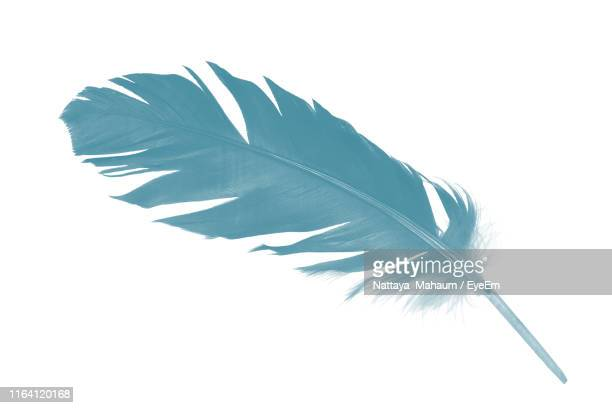 close-up of blue feather against white background - piuma foto e immagini stock