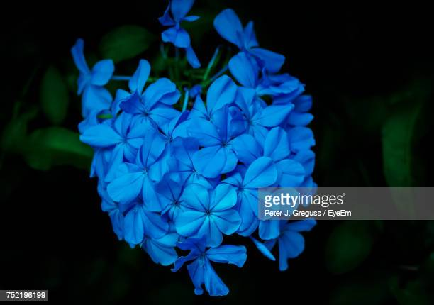 Close-Up Of Blue Flowers Blooming Outdoors