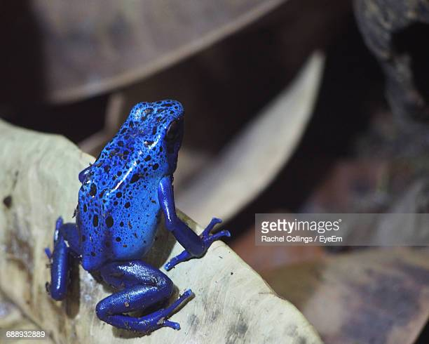 Close-Up Of Blue Frog