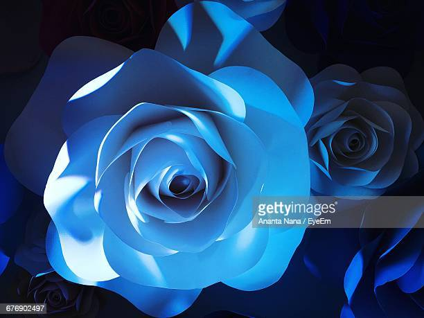 Close-Up Of Blue Roses
