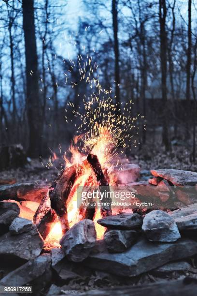 Close-Up Of Bonfire In Forest At Dusk