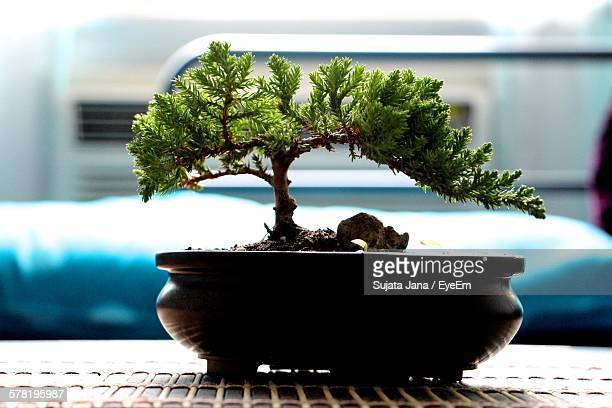 Close-Up Of Bonsai Tree On Table At Home
