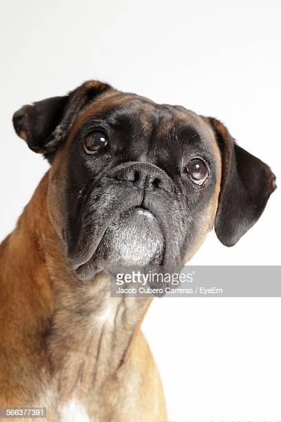 Close-Up Of Boxer Against White Background