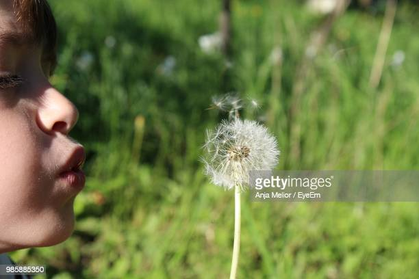 Close-Up Of Boy Blowing Dandelion Flower At Field