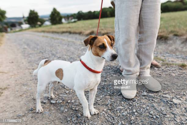 close-up of boy with dog on dirt track - jack russell terrier stock pictures, royalty-free photos & images