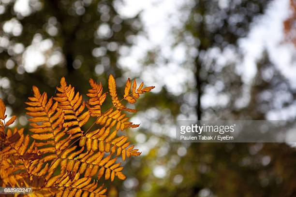 close-up of branch against sky - paulien tabak stock pictures, royalty-free photos & images