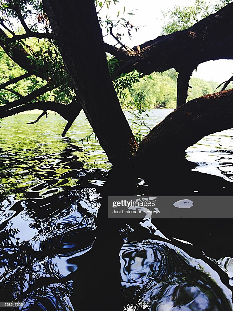 Close-Up Of Branches Hanging Over Lake : Stock Photo