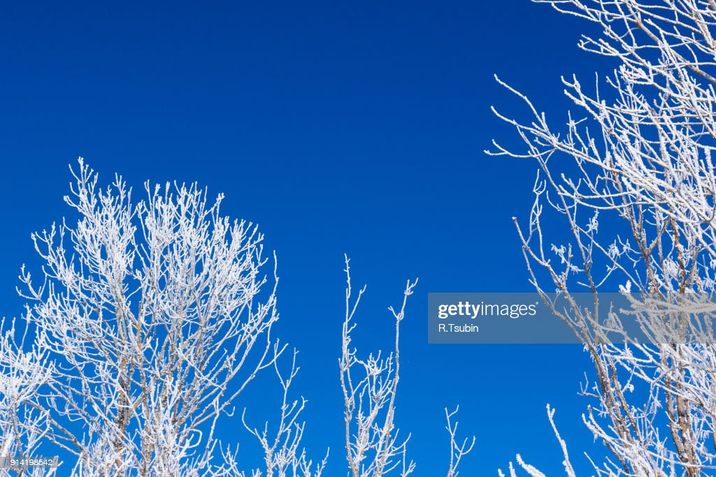 Closeup of branches of a tree : Stock-Foto