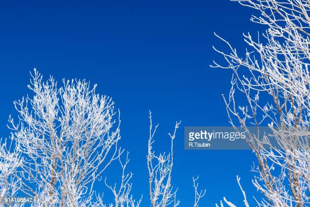 closeup of branches of a tree - februar stock-fotos und bilder