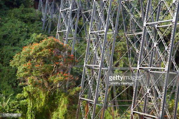 close-up of bridge stanchions and african tulip tree in a lush canyon in hawaii - timothy hearsum imagens e fotografias de stock