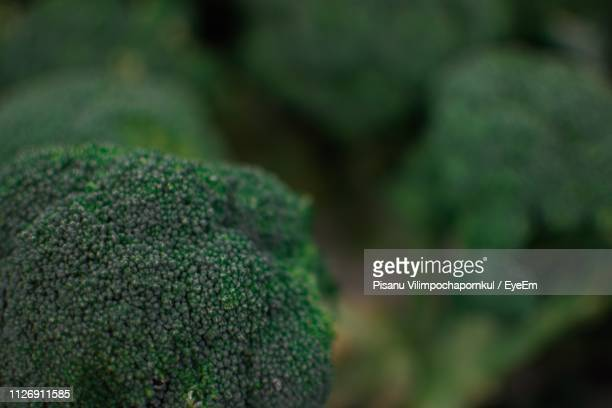 Close-Up Of Broccoli For Sale At Market