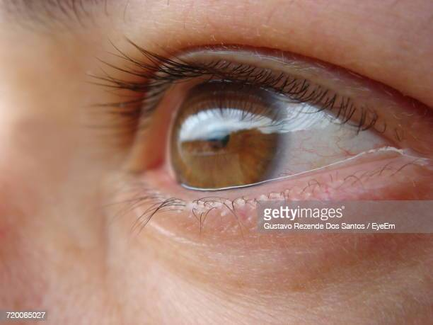 close-up of brown eyes - grey eyes stock pictures, royalty-free photos & images