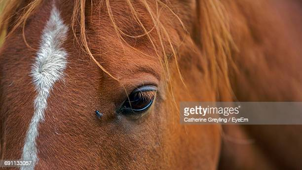 Close-Up Of Brown Horse Eye