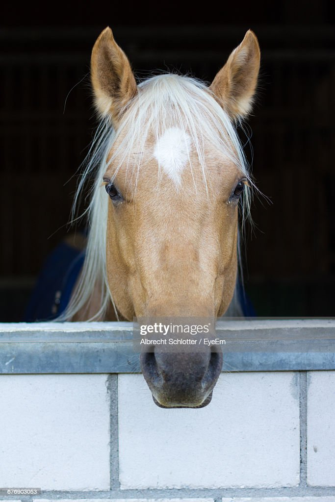 Close-Up Of Brown Horse In Stable : Stock-Foto