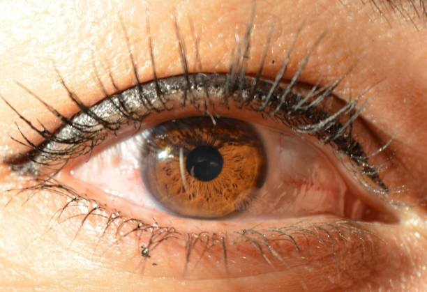 Close-Up Of Brown Woman Eye