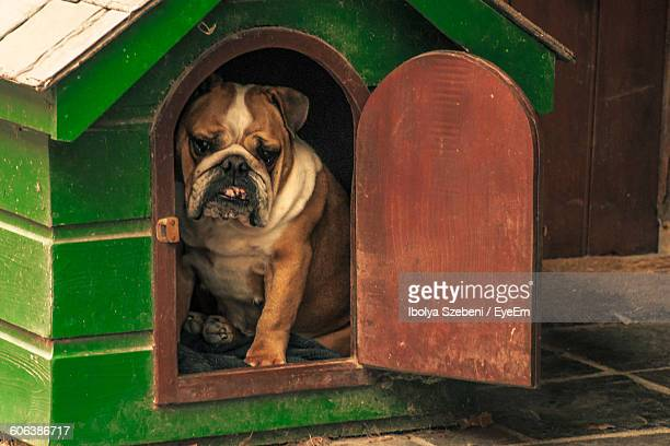 Close-Up Of Bulldog Sitting In Kennel